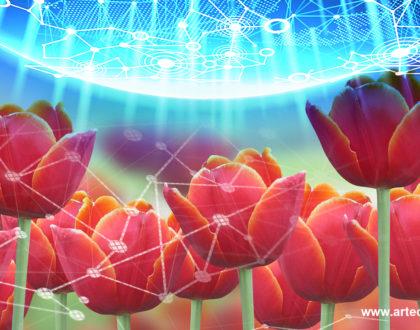 Tulipanes Digitales - Texel - Artech Digital